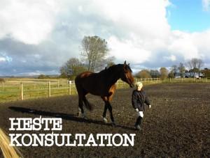 Hestekonsultation 2-001
