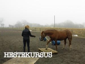 Hestekursus-001