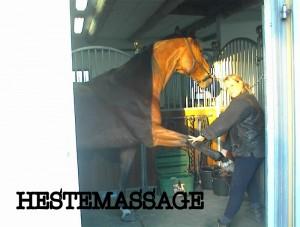 Hestemassage-001