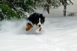 aktivering af din hund